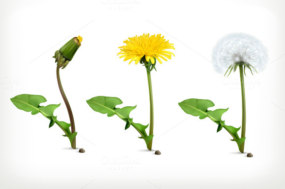Dandelion Flowers Vector Icons