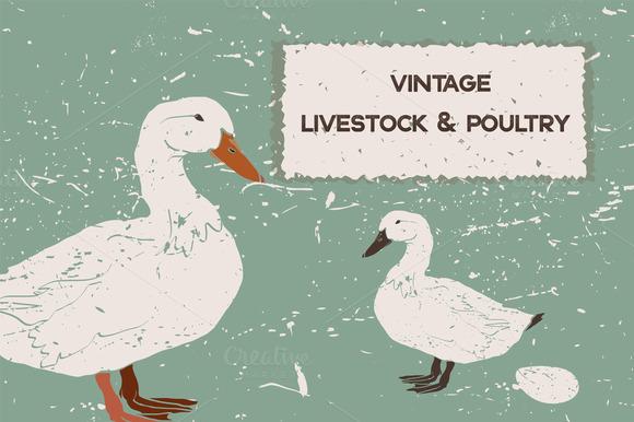 Vintage Livestock Poultry