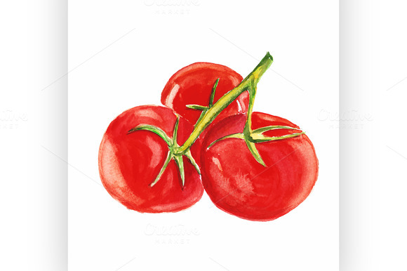 Tomato Vector Watercolor Painting