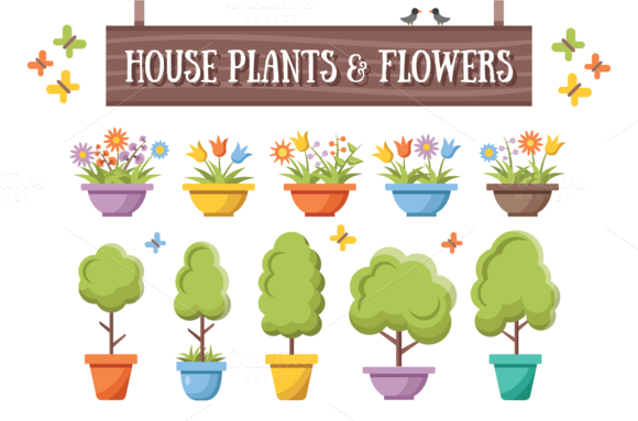 House Plants Flowers