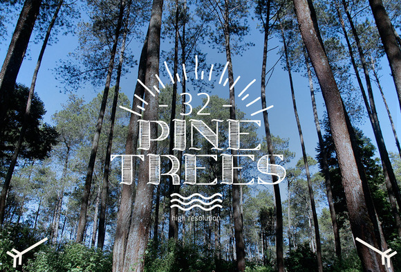 32 Pine Trees Photo Pack