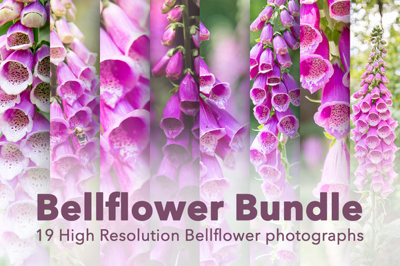 Bellflower Flower Bundle