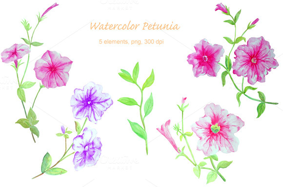 Watercolor Petunia Clipart