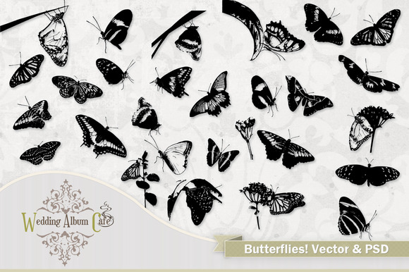 Butterflies Vector Butterfly Art