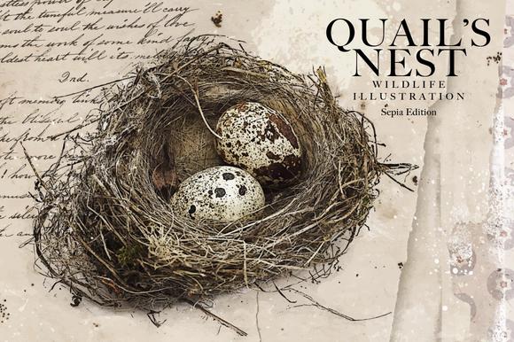 Quail S Nest Sepia Edition