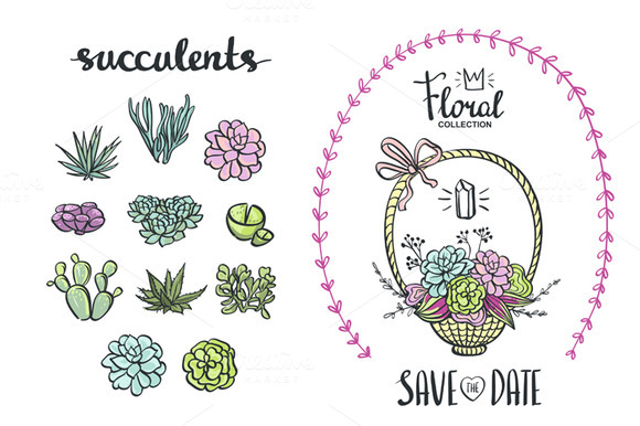 Cute Succulents Illustration