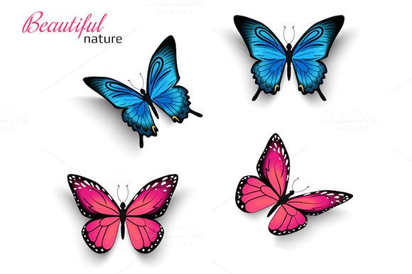 Vector Realistic Butterflies
