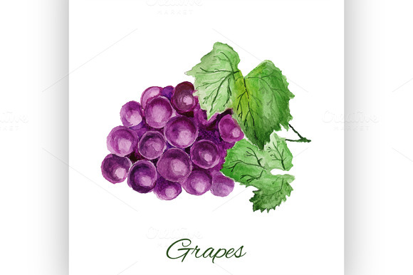 Grapes Watercolor Painting