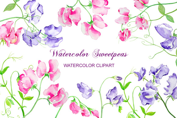 Watercolor Flower Sweet Peas