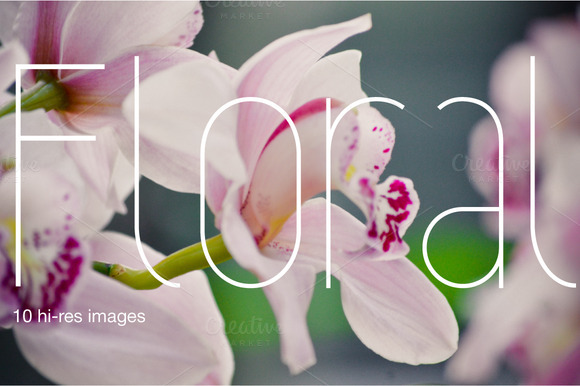 Floral BIG Photo Pack Of 10