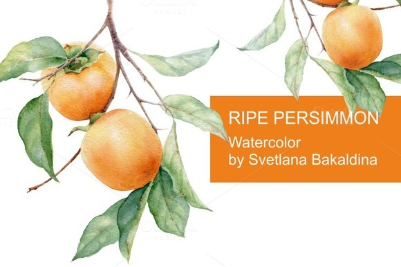 Watercolor Ripe Persimmon