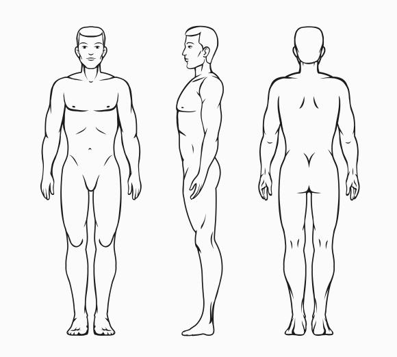 Male Body Vector Illustration