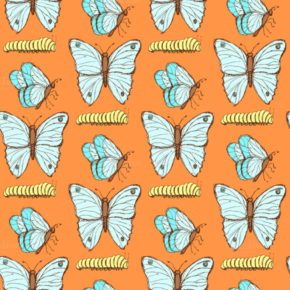 Sketch Butterfly And Caterpillar