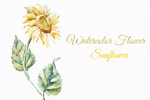 Watercolor Flowers Sunflower