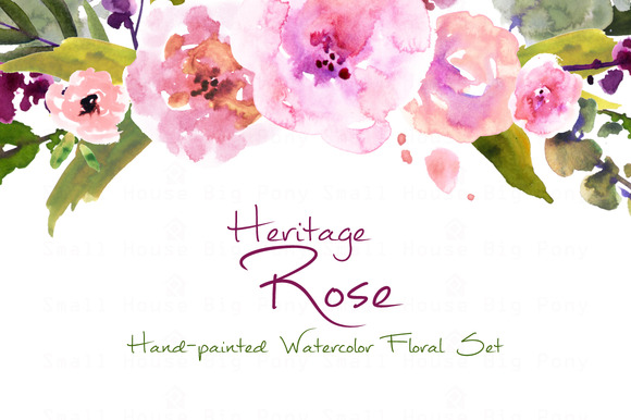 Heritage Rose- Watercolor Clip Art