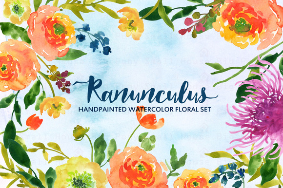 Ranunculus- Watercolor Clip Art