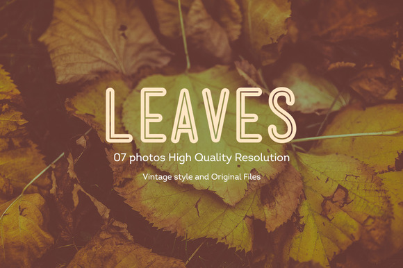 07 Leaves Photos HQ V1