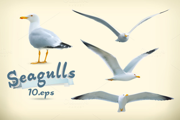 Seagulls Vector Illustration