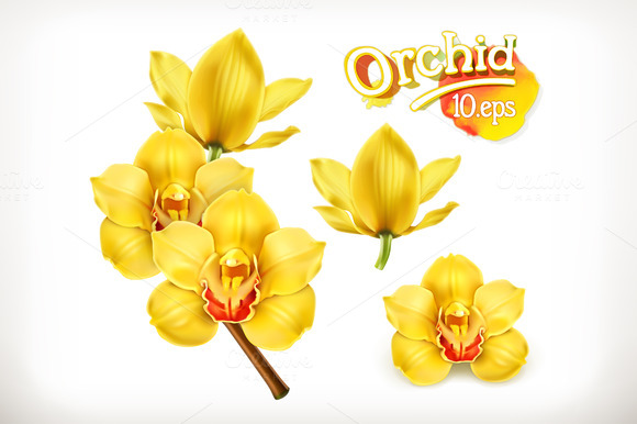 Orchid Flowers Illustration