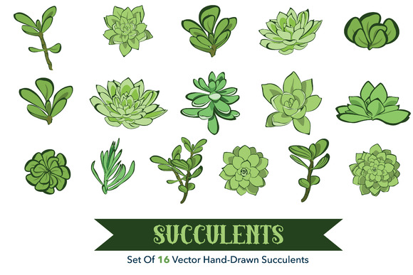 16 Succulets Hand Drawn Clipart