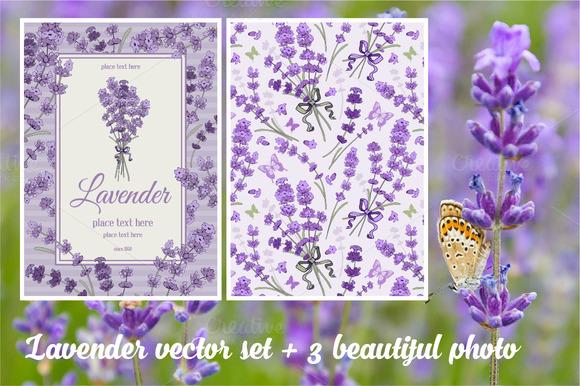 Gentle Lavender In Vector