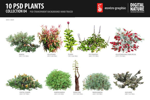 10 PSD Plants Collection 4