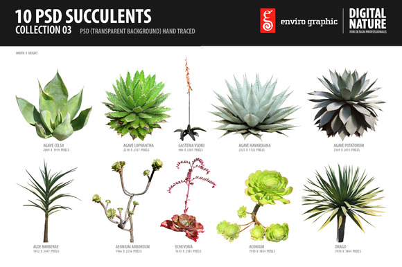 10 PSD Succulents Collection 3