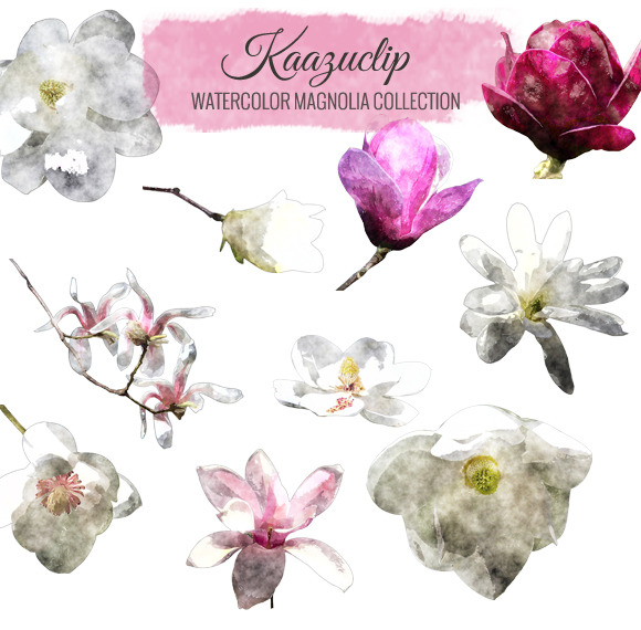 Watercolor Magnolia Collection