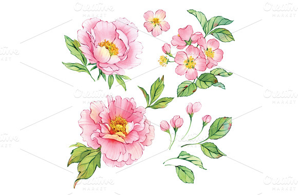 Set Of Watercolor Peonies And Cherry