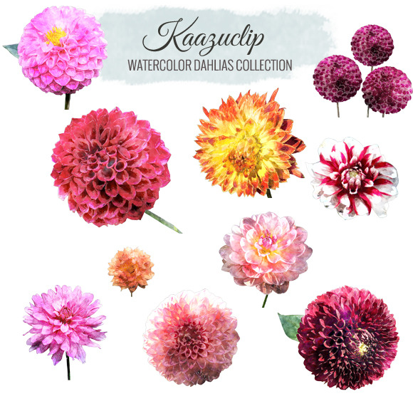 Watercolor Dahlia Collection