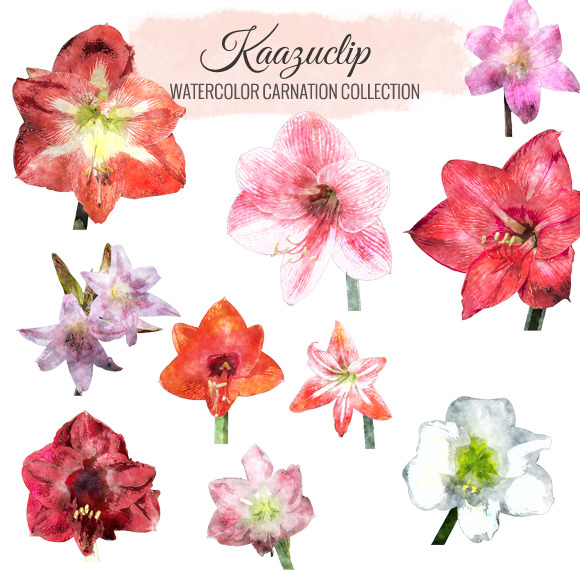 Watercolor Amaryllis Collection