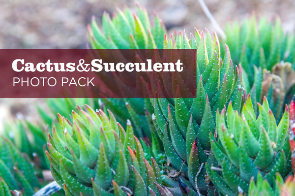 Cactus And Succulent Photo Pack