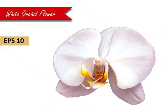 White Orchid Flower Vector
