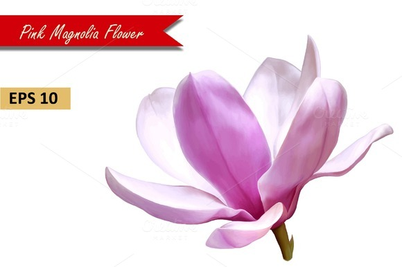 Pink Magnolia Flower Vector