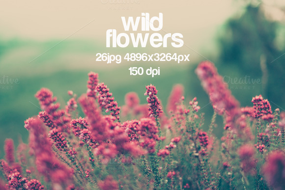 Wild Flowers 45% Off