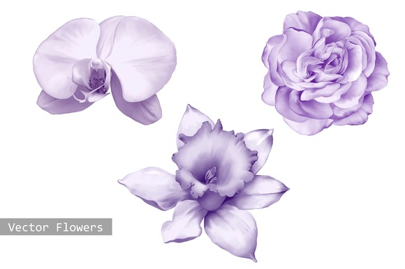 Orchid Rose And Daffodil Flower