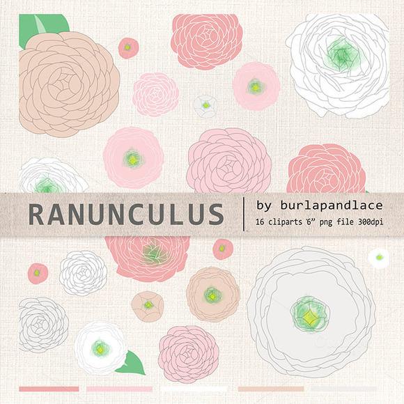 Ranunculus Flower Clipart