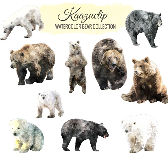 Watercolor Bear Collection