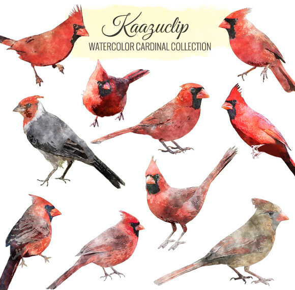 Watercolor Cardinal Collection