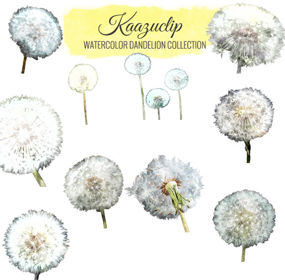 Watercolor Dandelion Collection