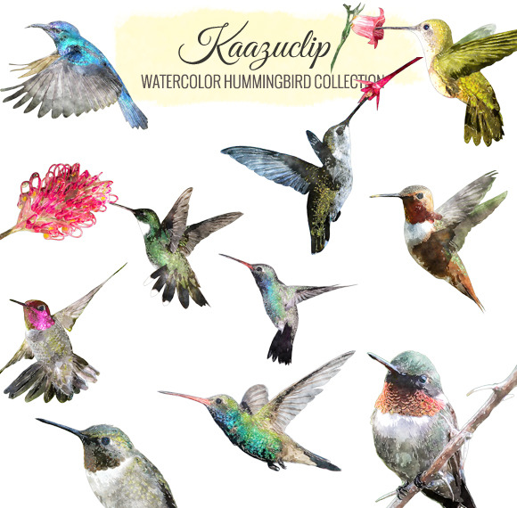 Watercolor Hummingbird Collection