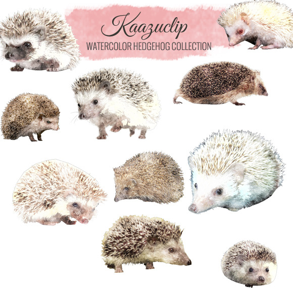 Watercolor Hedgehog Collection