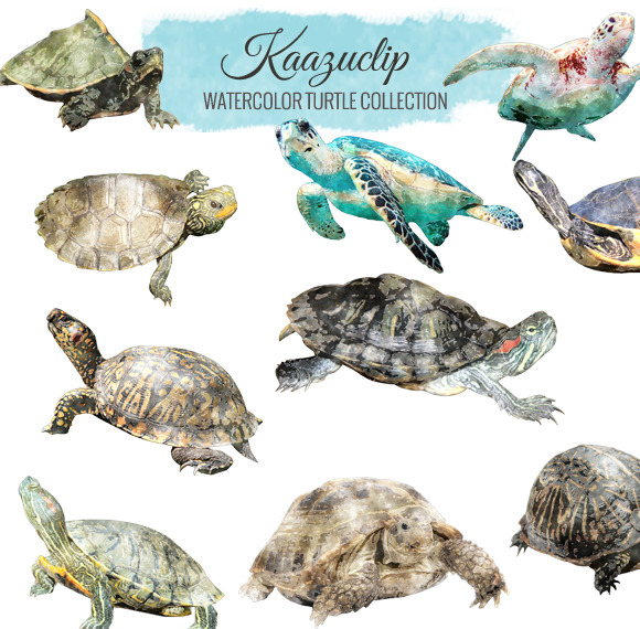 Watercolor Turtle Collection