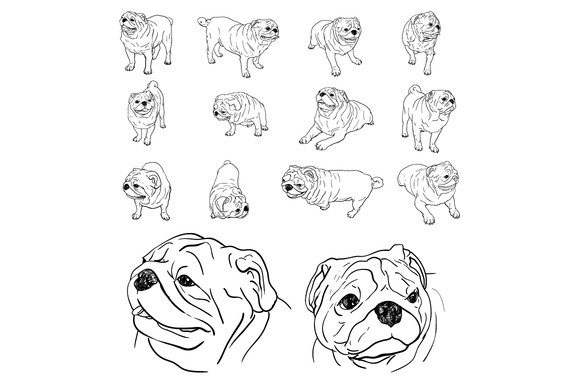 Drawing Set Of Pug