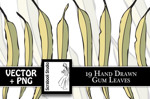 19 Hand Drawn Gumleaves