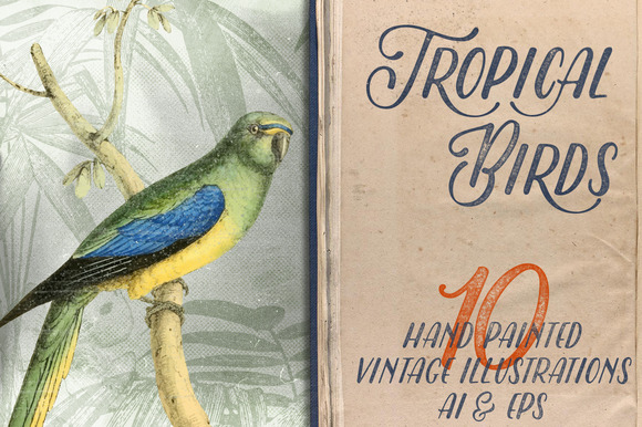 Tropical Birds Vintage Illustrations