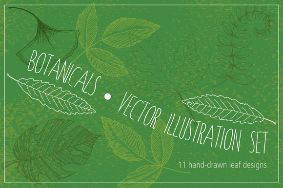 Botanical Leaves Hand-Drawn Vectors