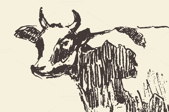 Spotted Cow Illustration