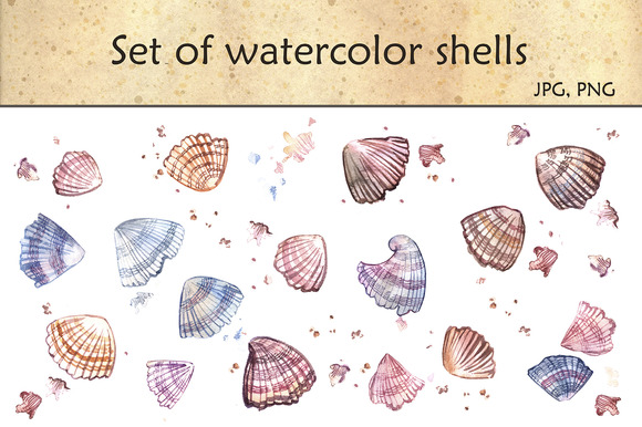 Set Of Watercolor Shells