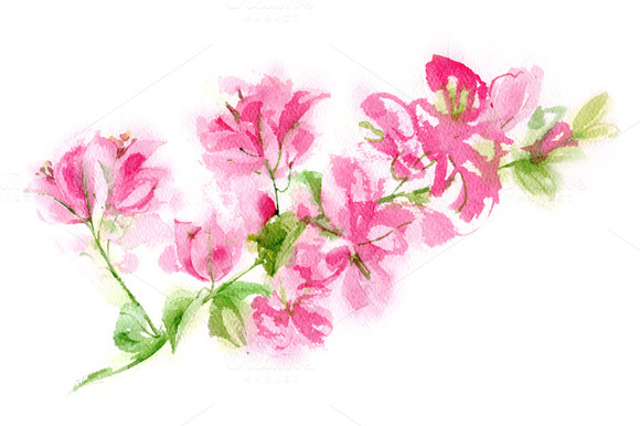 Watercolor Bougainvillea Branch